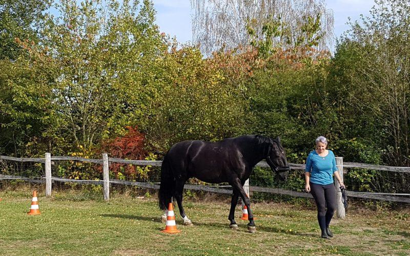 pferdegestütztes Coaching Klarheit