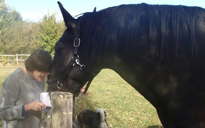 pferdegestütztes Coaching Verbundenheit
